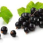 О пользе черной смородины