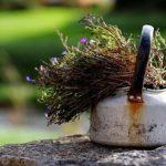Очищение организма при помощи травяного сбора — Часть 1