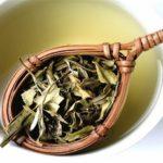 Может ли навредить белый чай