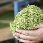 Элитный китайский зеленый чай Хиньян Маоцзянь